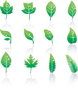 organic leaf
